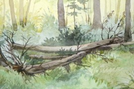 Sunny Forest original painting by Algirdas Zibalis. Watercolor painting