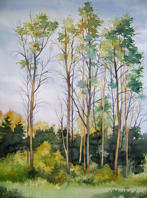 Tall Trees original painting by Algirdas Zibalis. Watercolor painting