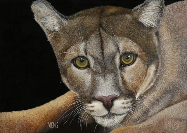 Puma concolor original painting by Laima Žeimienė-Vienis. For living room