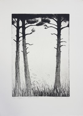 Pine Forest II