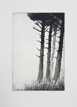 Pine Forest I