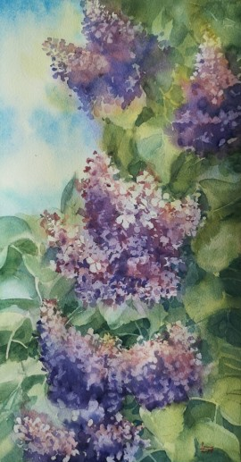 My Lilac Bushes