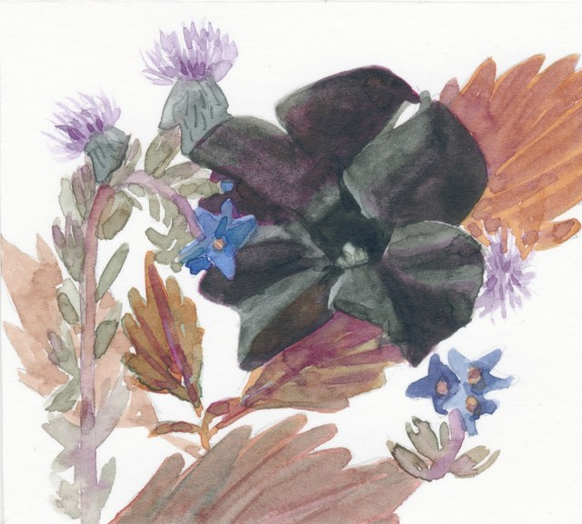 Black Petunia And Wild Flowers