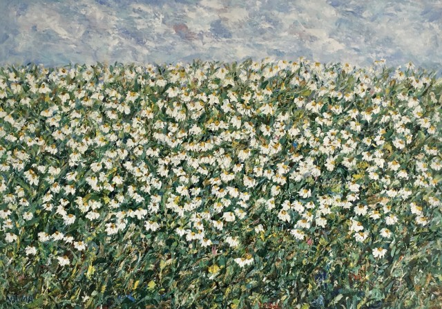 Field Of Chamomile II
