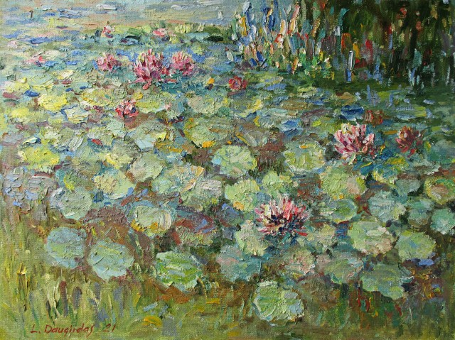 Blossoming Of Water Lilies